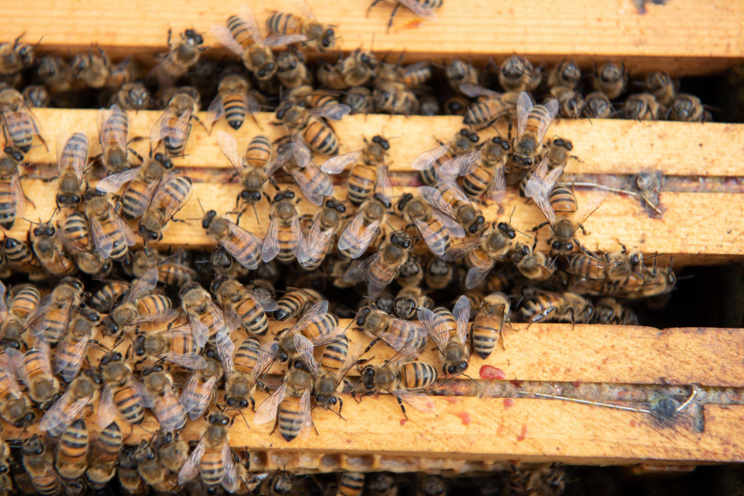 """""""Ecco che cosa può fare ciascuno di noi per salvare le api"""""""