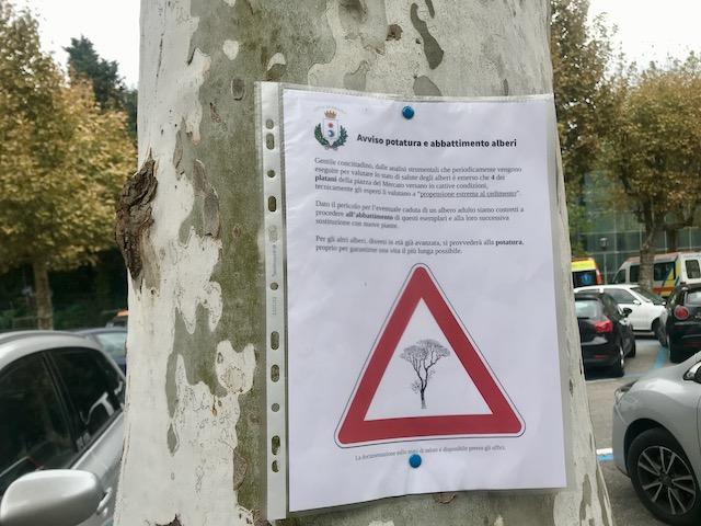 Quattro platani in piazza del Mercato a Fiesole e due in piazza della Vittoria a Caldine devono essere abbattuti e sostituiti