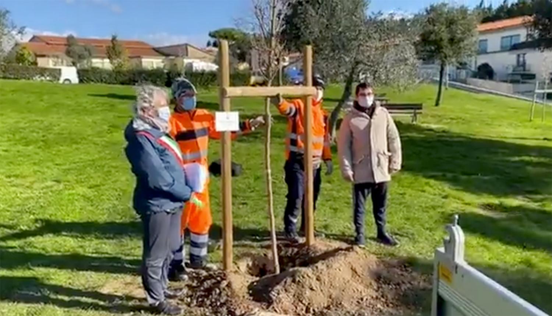 Giornata dell'albero: il sindaco ha piantato tre alberi per i bambini nati nel 2019